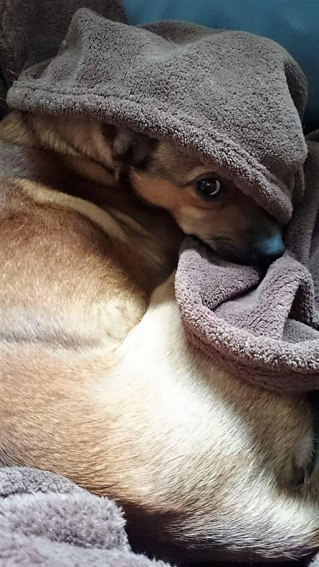 Bildertagebuch - Nacho, herziger kleiner Hundeschnuggel ...VERMITTELT! 31636568qu