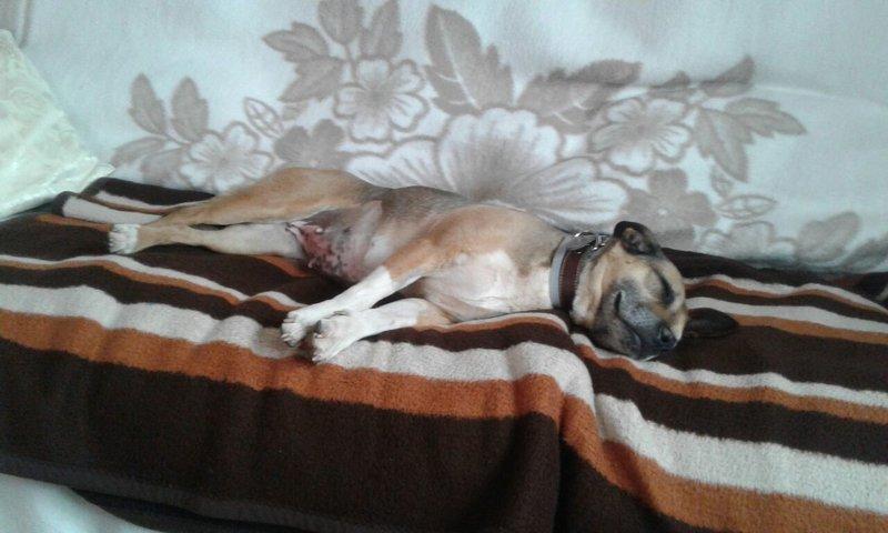 Bildertagebuch -  Ivy (jetzt Maja): eine kleine Hundelady hofft - VERMITTELT! 31696836rz