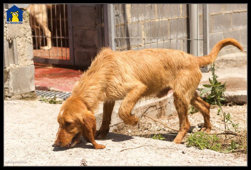 Bildertagebuch - SANCHO, ein ganz besonderer Hund...VERMITTELT! 31796600ad