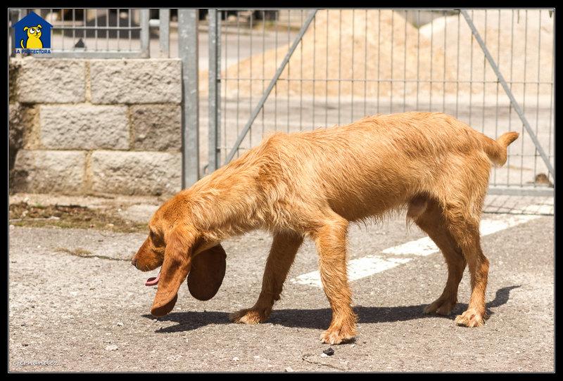 Bildertagebuch - SANCHO, ein ganz besonderer Hund...VERMITTELT! 31796603mb