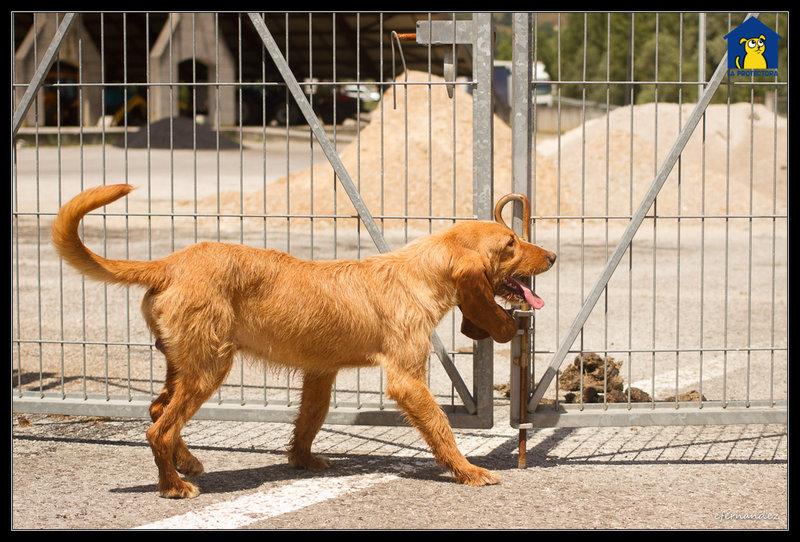Bildertagebuch - SANCHO, ein ganz besonderer Hund...VERMITTELT! 31796605ld