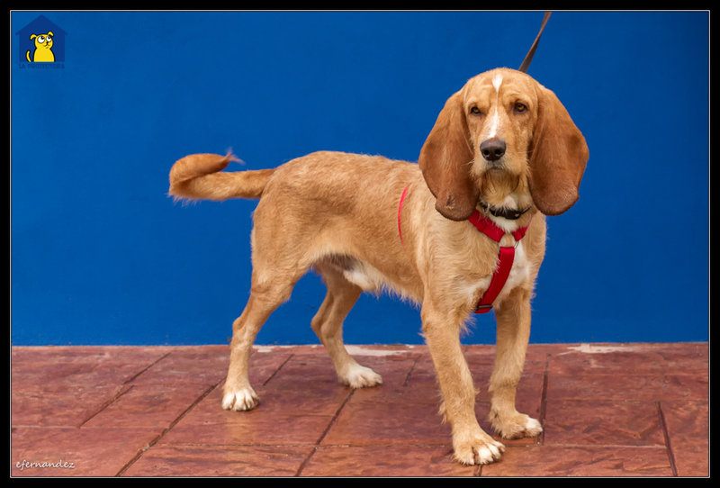 Bildertagebuch - SANCHO, ein ganz besonderer Hund...VERMITTELT! 31796606gd