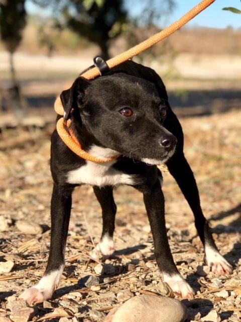 Bildertagebuch - Isla: ein zartes, kleines Hundemädchen sucht verzweifelt seine Menschen - VERMITTELT! 31804878ui