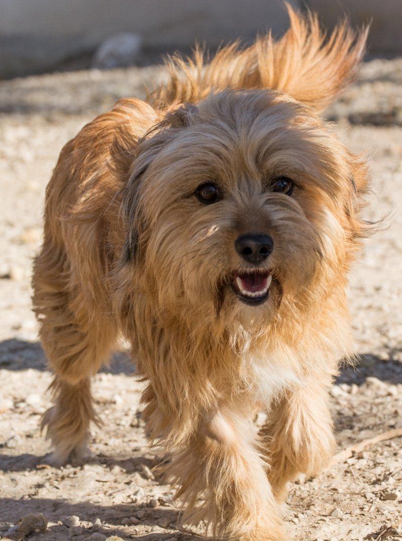 Bildertagebuch - Strubel, entzückendes Hundemädchen war ganz allein unterwegs...VERMITTELT! 31930638bd