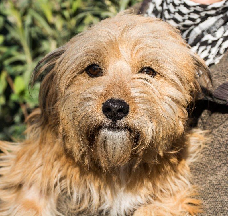 Bildertagebuch - Strubel, entzückendes Hundemädchen war ganz allein unterwegs...VERMITTELT! 31930640wz