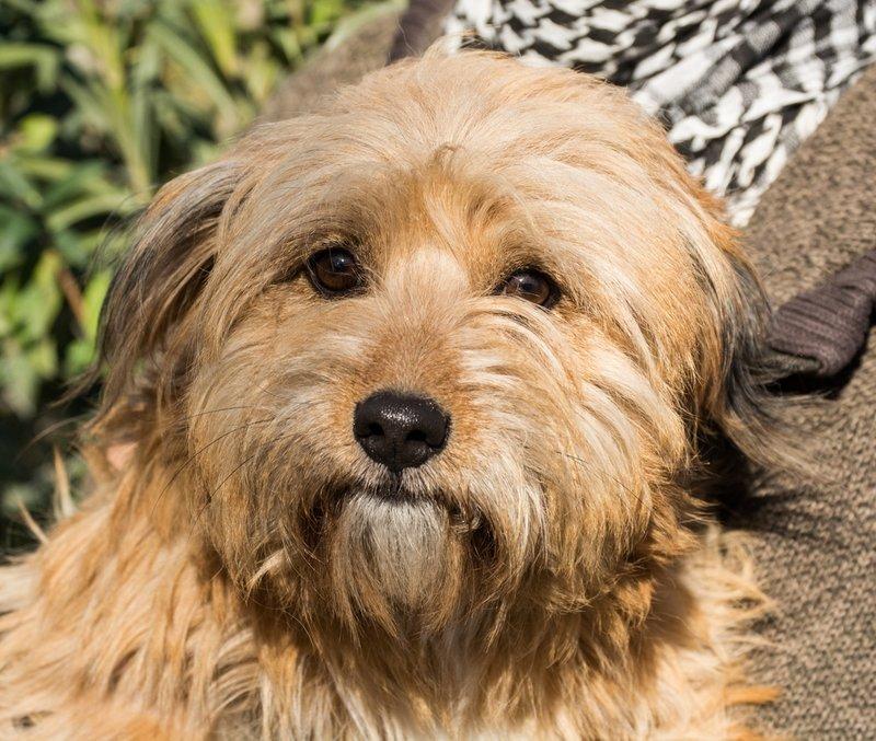 Bildertagebuch - Strubel, entzückendes Hundemädchen war ganz allein unterwegs...VERMITTELT! 31930642uw
