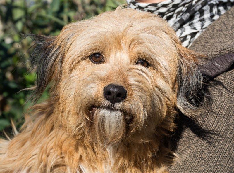 Bildertagebuch - Strubel, entzückendes Hundemädchen war ganz allein unterwegs...VERMITTELT! 31930645lp