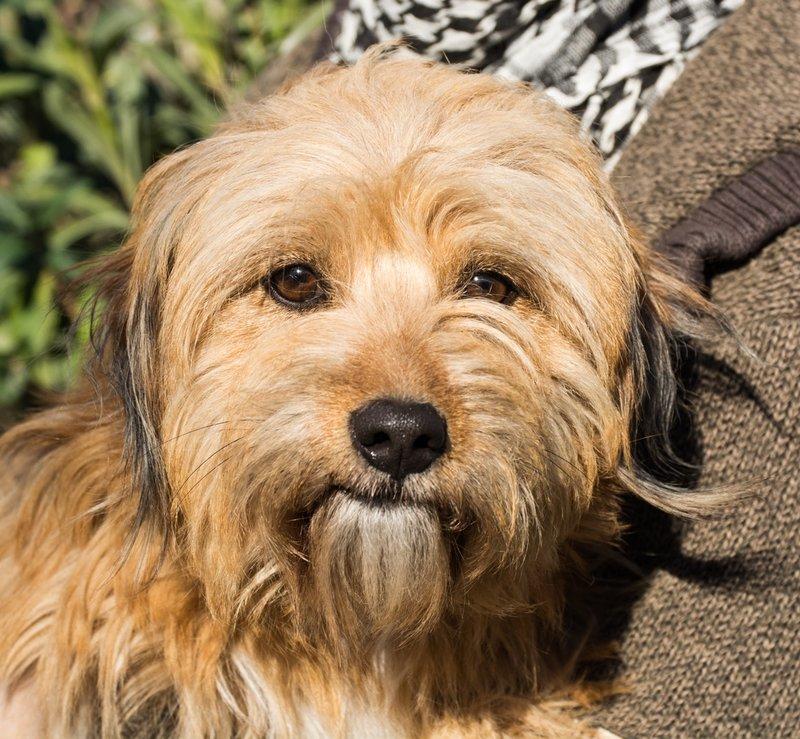 Bildertagebuch - Strubel, entzückendes Hundemädchen war ganz allein unterwegs...VERMITTELT! 31930646bj