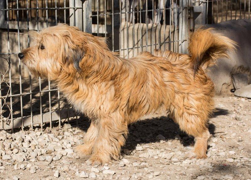 Bildertagebuch - Strubel, entzückendes Hundemädchen war ganz allein unterwegs...VERMITTELT! 31930647ud