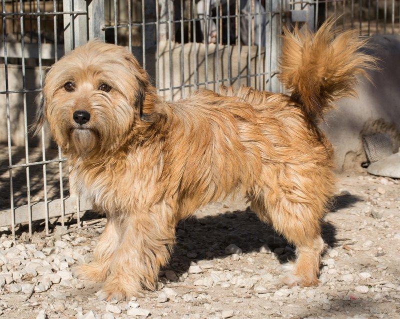 Bildertagebuch - Strubel, entzückendes Hundemädchen war ganz allein unterwegs...VERMITTELT! 31930649iq
