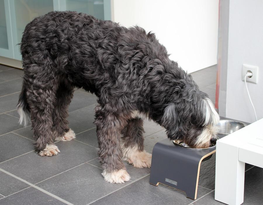 wesenstest hunde nordrhein westfalen