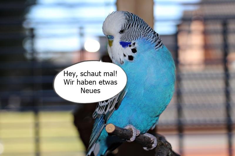 Comic Kabob Schaukel Wellensittich Forum