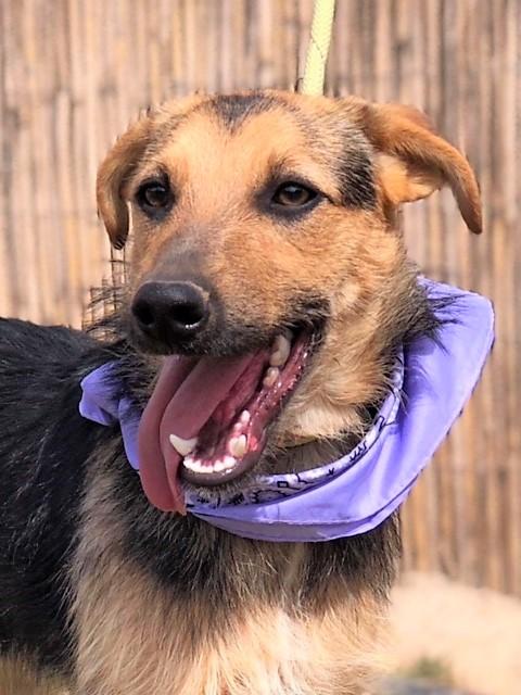 Bildertagebuch - Hannah (Storm), Sie sind auf der Suche nach einem kleinen Hundemädchen das Ihr Leben bereichern soll ? VERMITTELTT! 32229953gl