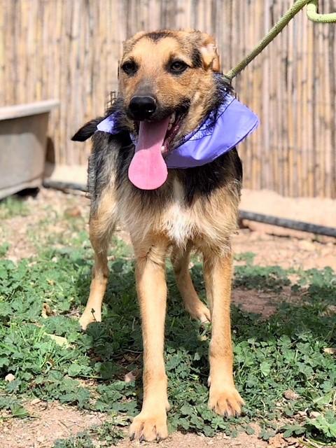 Bildertagebuch - Hannah (Storm), Sie sind auf der Suche nach einem kleinen Hundemädchen das Ihr Leben bereichern soll ? VERMITTELTT! 32229960mk