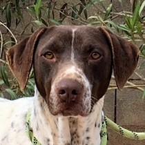 Bildertagebuch - Guiness: ein Hundekumpel fürs Leben - VERMITTELT - 32230065oi