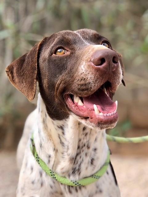 Bildertagebuch - Guiness: ein Hundekumpel fürs Leben - VERMITTELT - 32230071qi