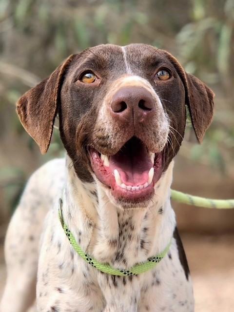Bildertagebuch - Guiness: ein Hundekumpel fürs Leben - VERMITTELT - 32230072hz