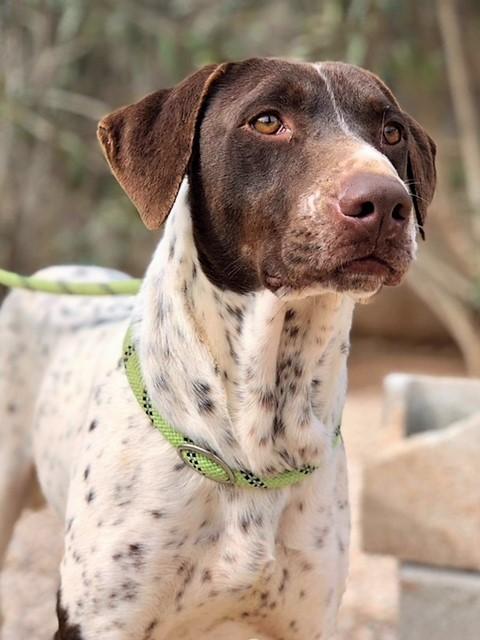 Bildertagebuch - Guiness: ein Hundekumpel fürs Leben - VERMITTELT - 32230081cu