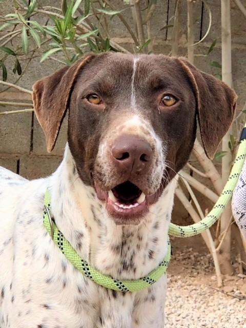 Bildertagebuch - Guiness: ein Hundekumpel fürs Leben - VERMITTELT - 32230082tp