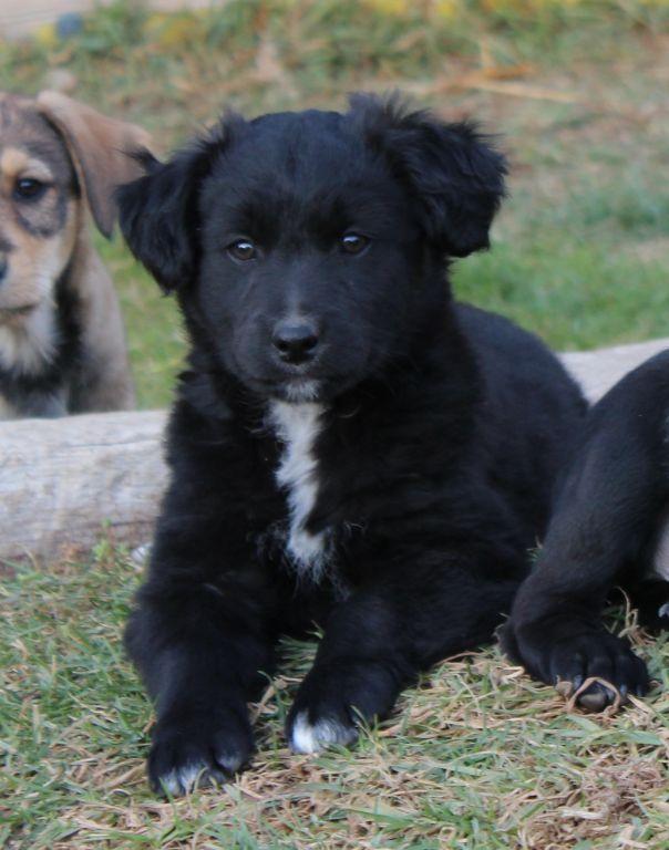 Bildertagebuch - Niam, witziger Hundejunge auf der Suche nach seiner Familie - ZUHAUSE IN SPANIEN GEFUNDEN! 32249170de