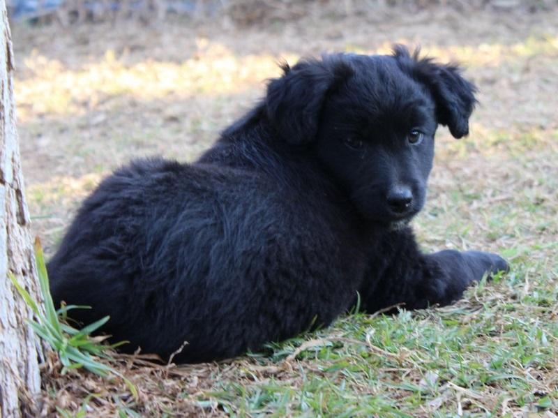 Bildertagebuch - Niam, witziger Hundejunge auf der Suche nach seiner Familie - ZUHAUSE IN SPANIEN GEFUNDEN! 32249171qy