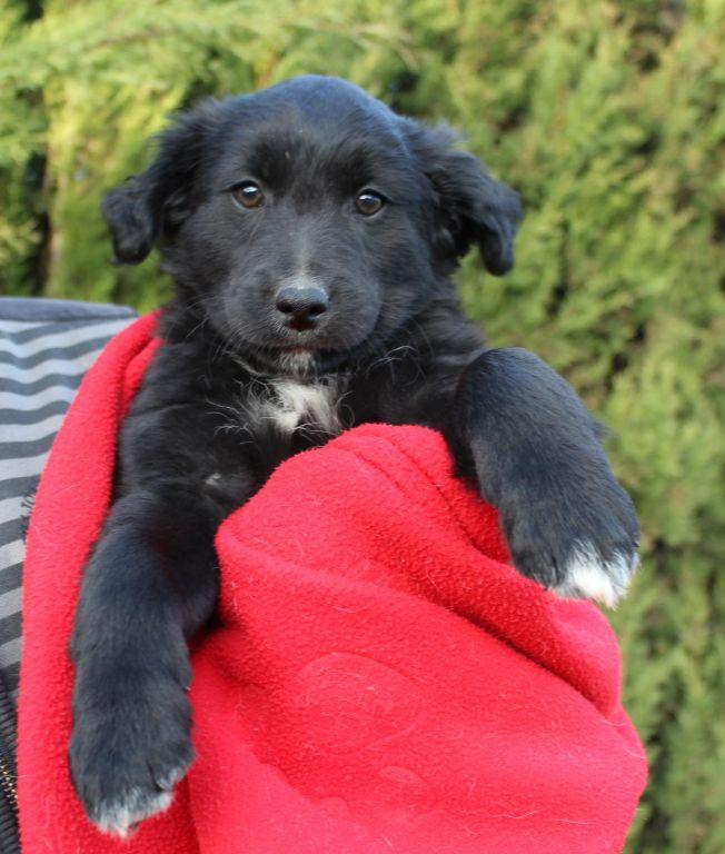 Bildertagebuch - Niam, witziger Hundejunge auf der Suche nach seiner Familie - ZUHAUSE IN SPANIEN GEFUNDEN! 32249173ab