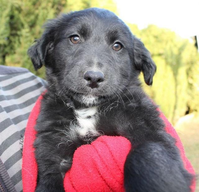 Bildertagebuch - Niam, witziger Hundejunge auf der Suche nach seiner Familie - ZUHAUSE IN SPANIEN GEFUNDEN! 32249174yq