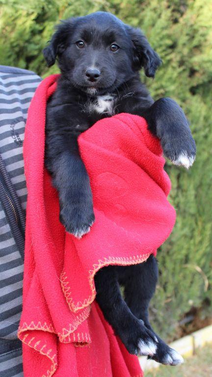 Bildertagebuch - Niam, witziger Hundejunge auf der Suche nach seiner Familie - ZUHAUSE IN SPANIEN GEFUNDEN! 32249175cf