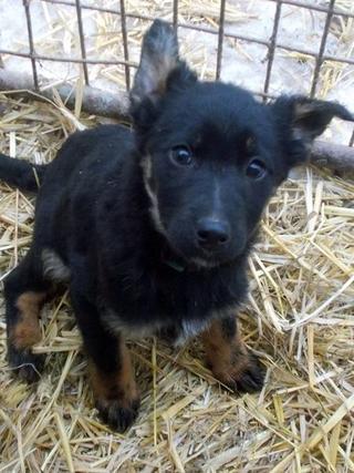 Kiara, Hajduszoboszlo lebt jetzt glücklich in Deutschland 32289970vy