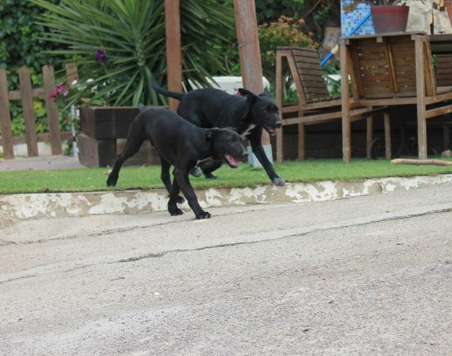 Bildertagebuch - Congo, Welpenschnuggel ist bereit ins Leben zu starten! - in Spanien ZUHAUSE GEFUNDEN! 32341344bt