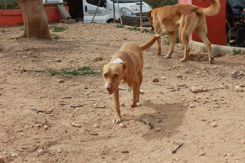 Bildertagebuch - ONIX, ein Hund zum Verlieben Zuhause in Spanien gefunden! 32360367nw