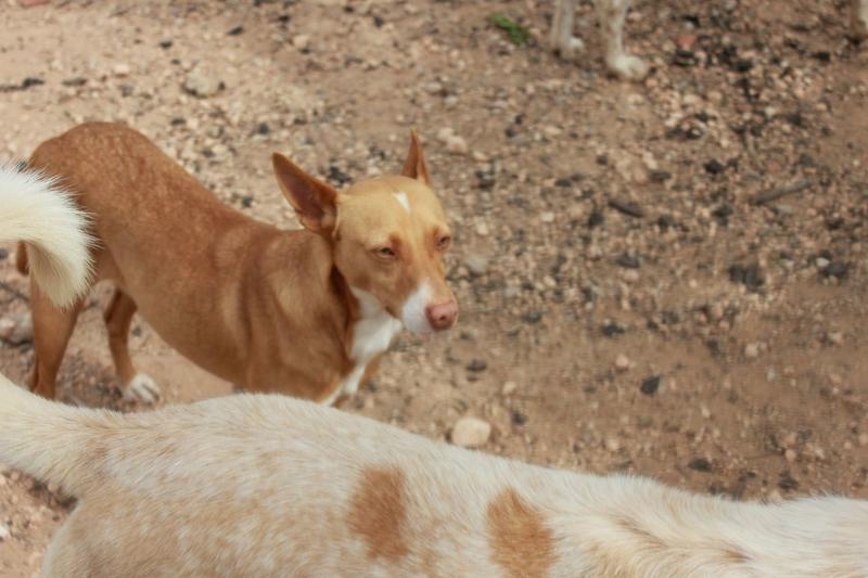 Bildertagebuch - ONIX, ein Hund zum Verlieben Zuhause in Spanien gefunden! 32360368cj