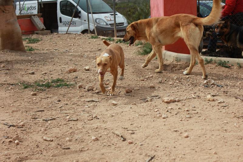 Bildertagebuch - ONIX, ein Hund zum Verlieben Zuhause in Spanien gefunden! 32360375gp