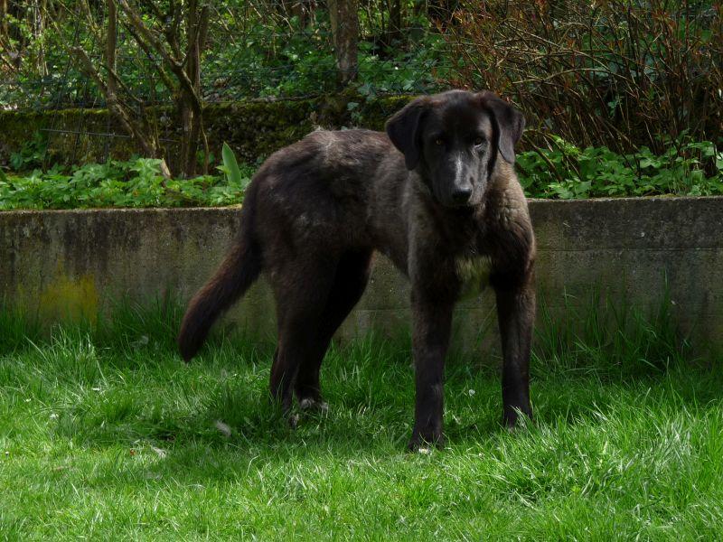 Bildertagebuch - IONA, großes, flauschiges Mädchen in der Farbe eines Wolfes - VERMITTELT! 32414431ds