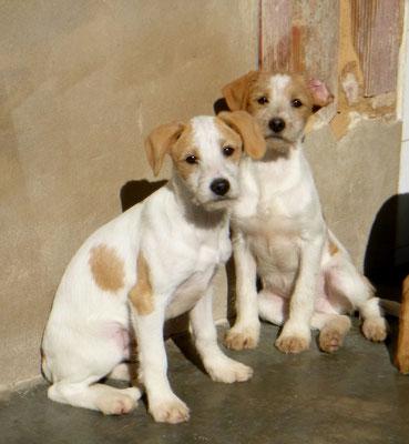 Bildertagebuch - Jimbo, süßer Hundebub möchte die Welt entdecken...ZUHAUSE IN SPANIEN GEFUNDEN! 32513023ry