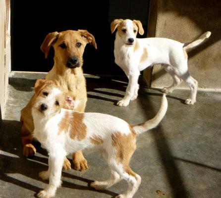 Bildertagebuch - Jimbo, süßer Hundebub möchte die Welt entdecken...ZUHAUSE IN SPANIEN GEFUNDEN! 32513026lk