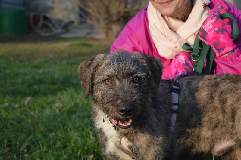 Bildertagebuch - Freddy (ehem. Django), verspielter Hund mit Flausen im Kopf - VERMITTELT! 32519501vm