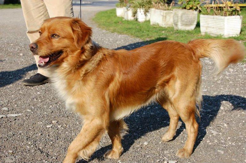 Bildertagebuch - SOUL, eine Seele von Hund...in ITALIEN ZUHAUSE GEFUNDEN! 32562058jg