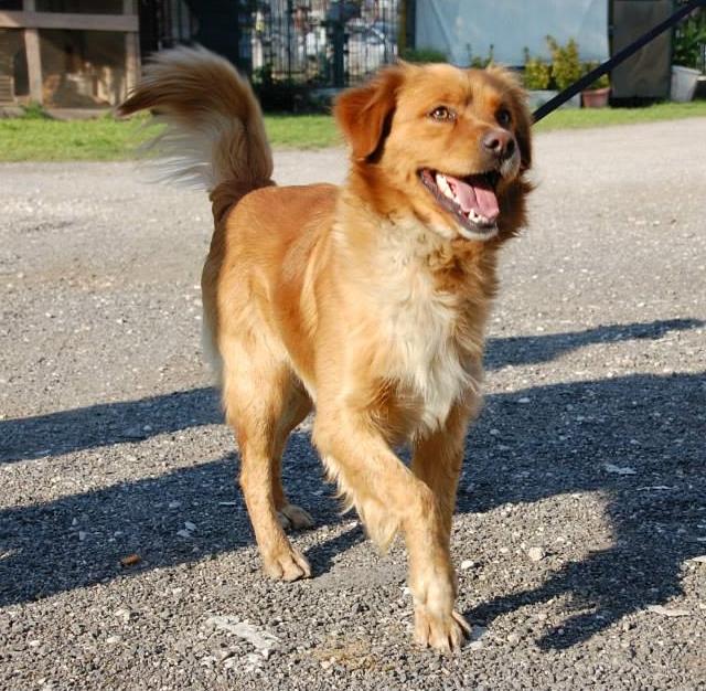 Bildertagebuch - SOUL, eine Seele von Hund...in ITALIEN ZUHAUSE GEFUNDEN! 32562060bd