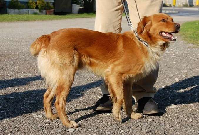 Bildertagebuch - SOUL, eine Seele von Hund...in ITALIEN ZUHAUSE GEFUNDEN! 32562062pe