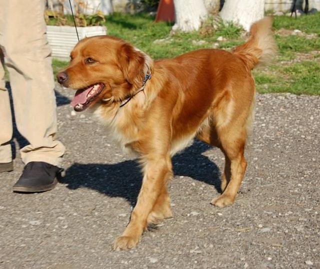 Bildertagebuch - SOUL, eine Seele von Hund...in ITALIEN ZUHAUSE GEFUNDEN! 32562065xu