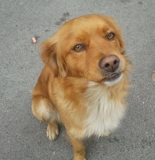 Bildertagebuch - SOUL, eine Seele von Hund...in ITALIEN ZUHAUSE GEFUNDEN! 32562067oh