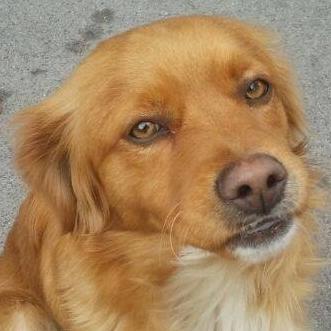 Bildertagebuch - SOUL, eine Seele von Hund...in ITALIEN ZUHAUSE GEFUNDEN! 32562068ht