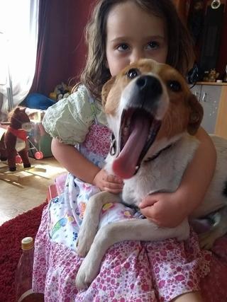 Blanka, Whipet-Beagle-Mischlingshündin, geb. ca. Januar 2016 32567000sk