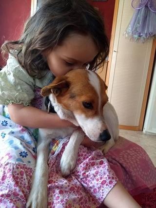 Blanka, Whipet-Beagle-Mischlingshündin, geb. ca. Januar 2016 32567001yx