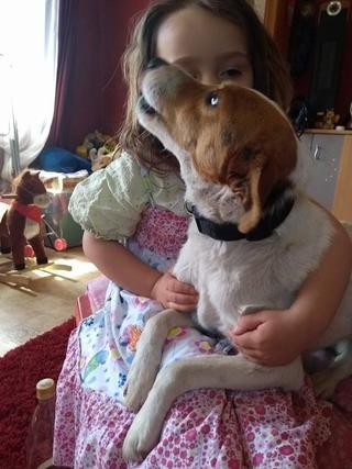 Blanka, Whipet-Beagle-Mischlingshündin, geb. ca. Januar 2016 32567002kg