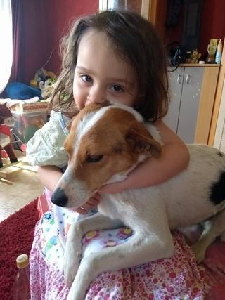 Blanka, Whipet-Beagle-Mischlingshündin, geb. ca. Januar 2016 32567003ow
