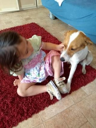 Blanka, Whipet-Beagle-Mischlingshündin, geb. ca. Januar 2016 32567004mz