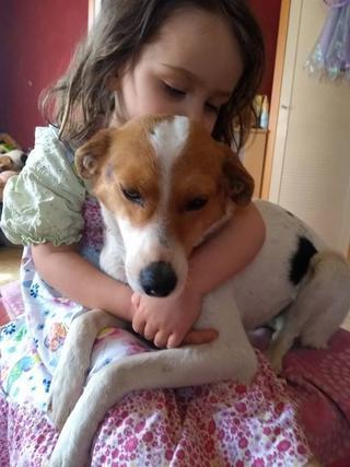 Blanka, Whipet-Beagle-Mischlingshündin, geb. ca. Januar 2016 32567005ml