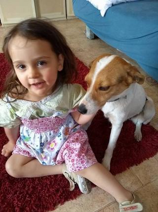 Blanka, Whipet-Beagle-Mischlingshündin, geb. ca. Januar 2016 32567024uw